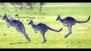 Australia - ciekawostki