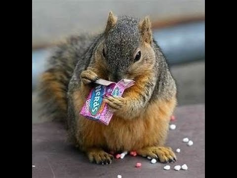 Best and funniest squirrel & chipmunk videos - Funny and cute animal compilation(Amazing)