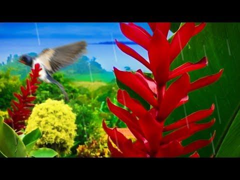 Rain in Jungle | Sleep, Study, Relax, Meditate with Rainstorm & BirdsWhite Noise