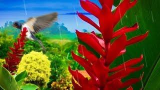 Rain in Jungle | Sleep, Study, Relax, Meditate with Rainstorm & Birds  White Noise