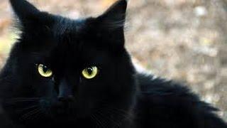 Черный кот за углом- Black cat