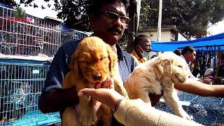RECENT DOG PUPPY PRICE AT GALIFF STREET PET MARKET KOLKATA   CUTE DOG PUPPY   27TH DEC 2020 VISIT