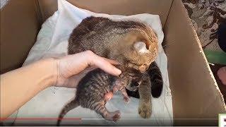 Котята КОШКА и КОТЯТА КОШКА РОДИЛА КОТЯТ НОВОРОЖДЕННЫЕ КОТЯТА