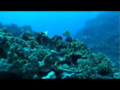 Buceo en Motu - Isla de Pascua