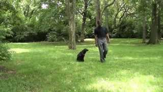 Guy Nashville Dog Trainer 063: Training A Rescue Dog Advanced Obedience