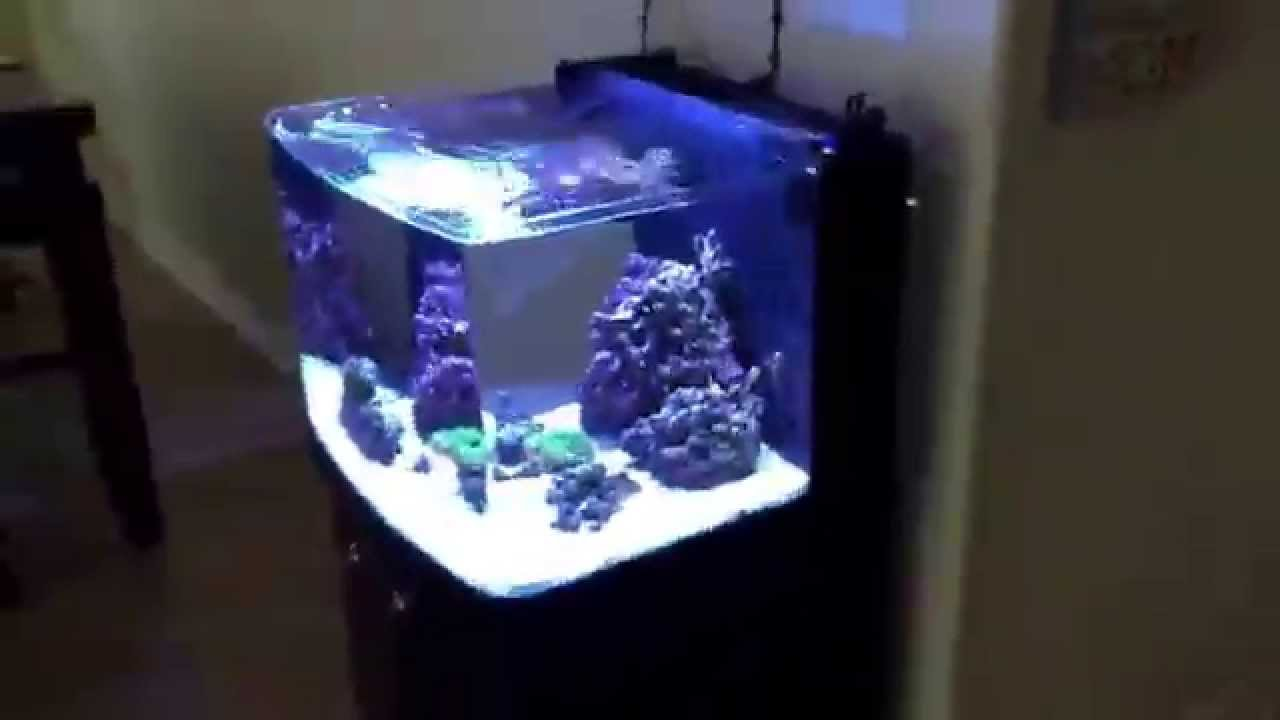 Rimless Biocube 29 With Apex Jr And Kessil Led Youtube