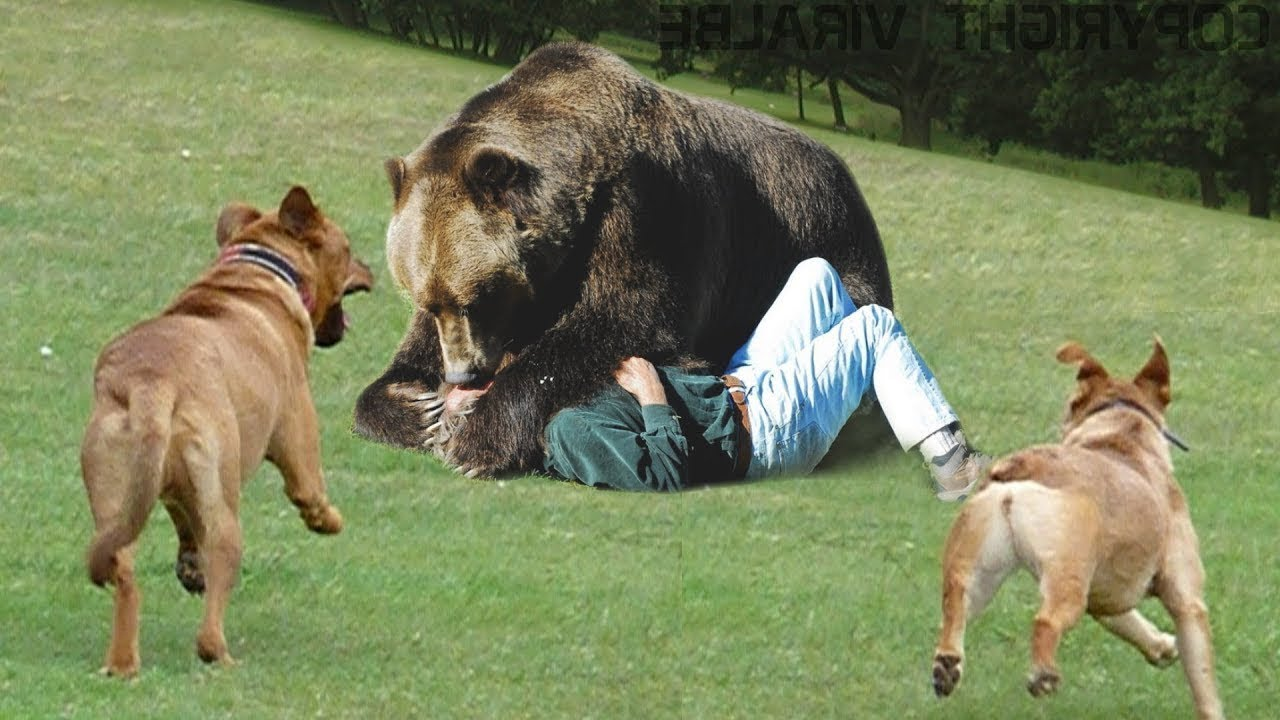 10 Dogs that can save You from a Bear Attack