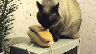 Кошки Генеральная уборка янв 11 P1222105(, 2011-01-23T18:36:51.000Z)