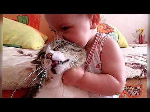 Караганда best cat krg Instagram photo Очаровательная
