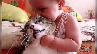 Очень классные фото кошек