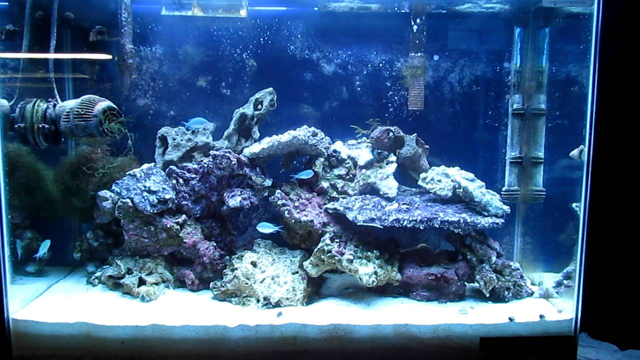 Interactive Tank Build Episode 7 (Part 2) (How To ...