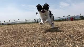 Amebaブログ「狆犬ちづひめ」2018年10月8日投稿をご覧ください。