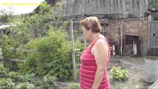 видео Как вырастить обильный урожай здоровой капусты без химии