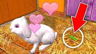 ПРИЮТ ДЛЯ ЖИВОТНЫХ #2 УХОД за ХОМЯКОМ, ЗАЙЦЕМ и МОРСКОЙ СВИНКОЙ в игре Pet World 3D
