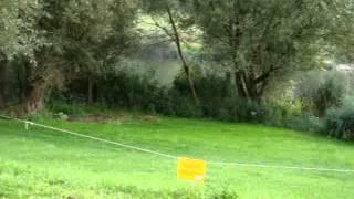 Schwanenangriff Revierverteidigung Nehren - Mosel 2013