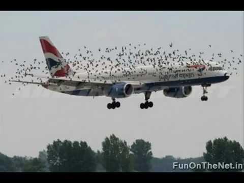Птицы и Самолеты