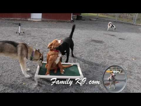 Sirius Dog Training - Montreal - FamilyK9.com
