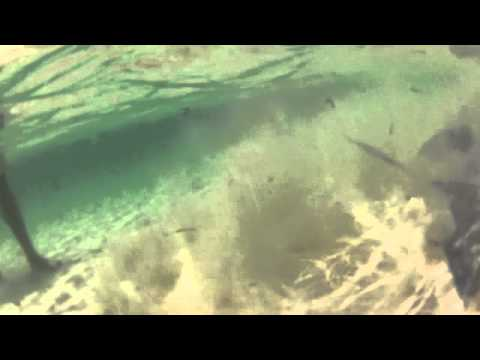 Stingray Feeding - Bahamas Up Close