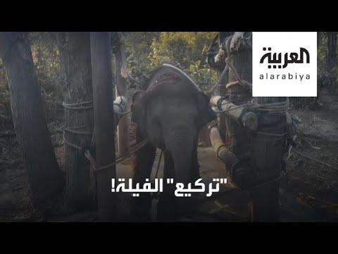 مشاهد عنيفة لتعذيب الفيلة بدعوى الترويض