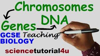 DNA, CHROMOSOMES, GENES & ALLELES. GCSE Science Biology