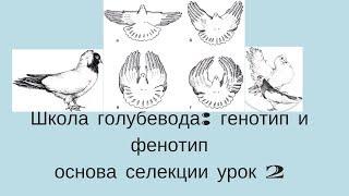 Школа голубевода урок 2 Основы селекции генотип и фенотип