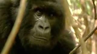 """John Lydon Goes Ape - """"Save the Go-ril-az !"""""""