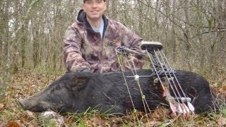 Spot and Stalk Hog Bow hunt in Texas  with 2 arrow impacts