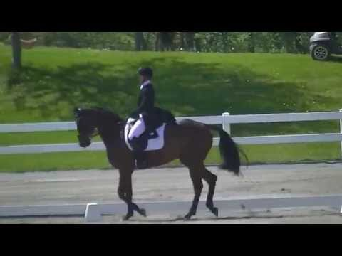 Erin Slyvester & Paddy the Caddy CCI 2 Dressage