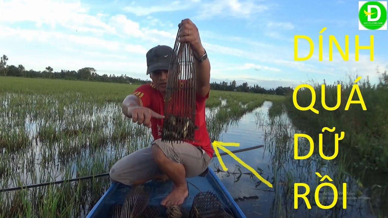 158  Đặc Xà Di Sao Cơn Bão - Dính Cá Rô Thấy Ham - Cá Rô Đầu Mùa Kho Mắm Ruốc   Đất Phương Nam