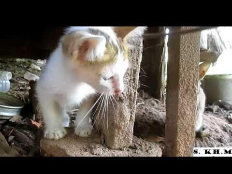 Really Smart, little Cats playing with stick like catching Mouse