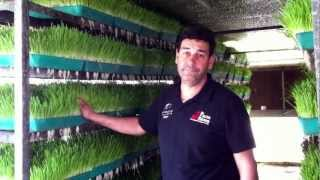 Growing Animal Fodder at 7 Hills Tallarook Farm Stay - Victoria Australia