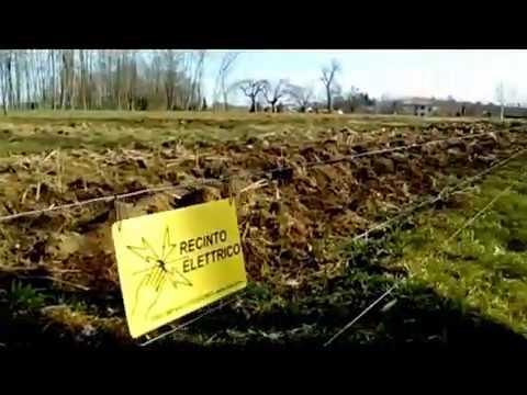 Recinzione Elettrica Per Cinghiali.Recinto Elettrificato Per Respingere I Cinghiali