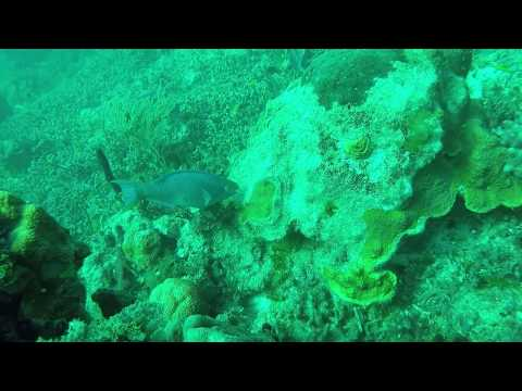 Bahama Dive 2015