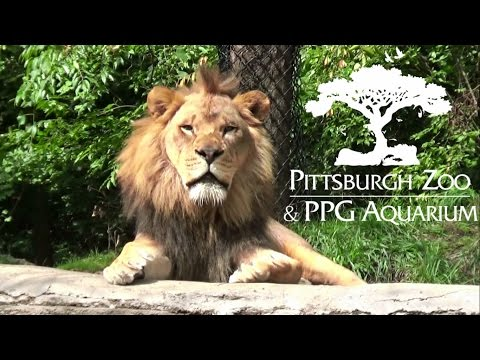Pittsburgh Zoo Tour & Review with The Legend