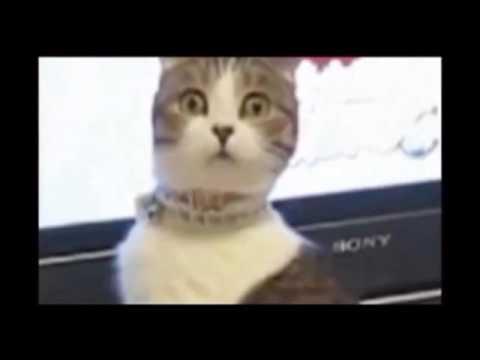Безумно смешные коты