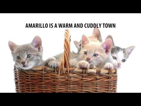 Amarillo is the Purrfect Place to Visit