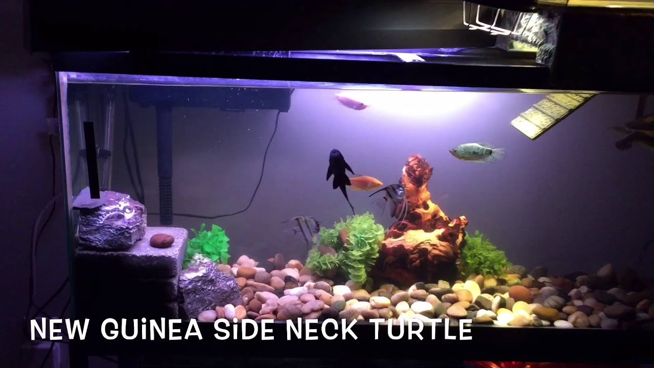 55 Gallon Turtle Tank Youtube