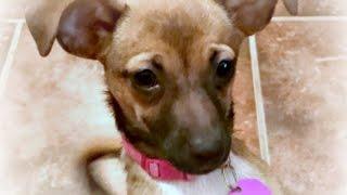 Kona Adoption Movie TracysDogs Update