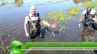 Gambar cover Samsun'da tıbbi sülük stokları kontrol edildi