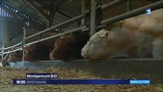 Fin de l'embargo chinois sur le bœuf : les espoirs de la filière en Bretagne