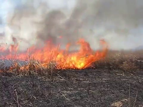 Prescribed Burn, Holla Bend National Wildlife Refuge
