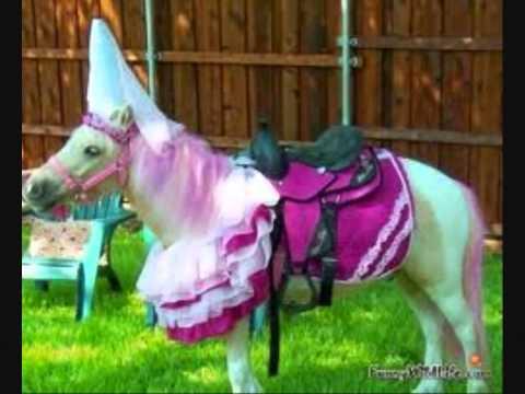 Funny Horses 🐴🐴 Funny Horses Moments And Fails (Part 2 ... |Youtube Pets Funny Horses