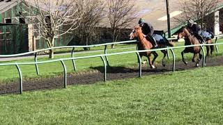 BRECK'S SELECTION Gallop on 24th March