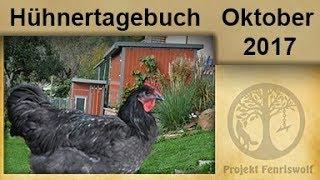 Jersey Hühner für den Tierpark - der letzte Hahn zieht aus