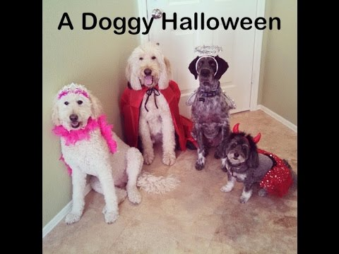 Dog Halloween !  Tricks AND Treats