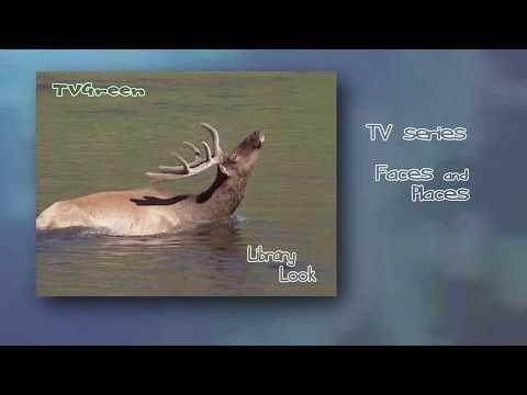 FaunaView: Yellowstone - Elk Browsing & Waterfowl