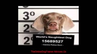 Dog Training Tips - Basic Dog Training Tips : How To Train A Dog To Stop Barking