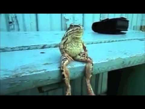A Frog Sitting on the Dock of the Bay Like a Human