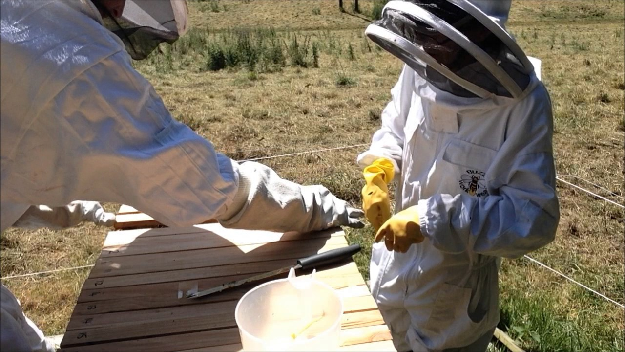 Fall Maintenance Hive Maintenance