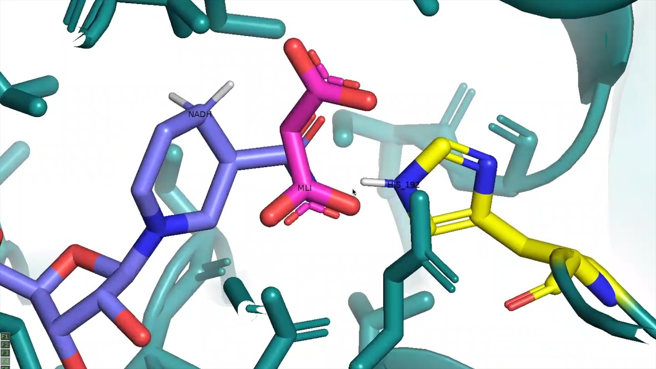 Using Molecular Visualization Software, Pymol, to understand metabolic enzymes: Lactate...